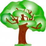 BIEN phylogeny